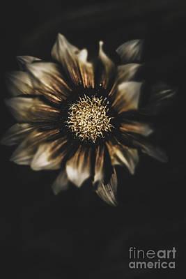 Dark Grave Flower By Tomb In Darkness Art Print