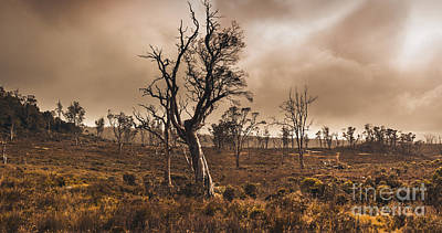 Dark Horror Landscape Of A Creepy Haunted Forest Print by Jorgo Photography - Wall Art Gallery