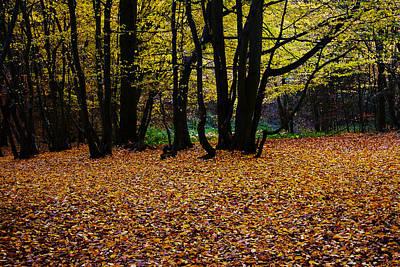 Photograph - Dark Wood by David Davies