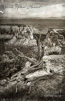 Photograph - Dead Tree On Cliff Overlooking View Of Buttes by Jill Battaglia
