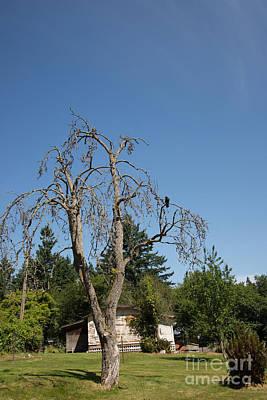 Snug Digital Art - Dead Tree With Crow by Carol Ailles