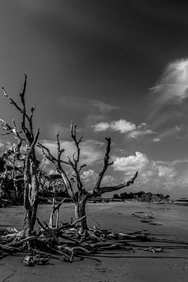 Dead Trees On The Beach Art Print