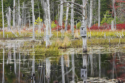 Photograph - Dead Trees Reflecting On A Maine Beaver Pond by Keith Webber Jr