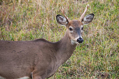 Photograph - Deer 51 by Cassie Marie Photography