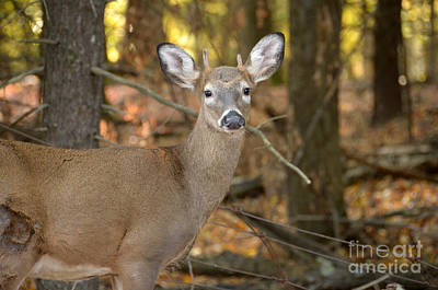 Photograph - Deer 53 by Cassie Marie Photography