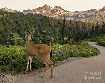 Photograph - Deer At Rainier by Sharon Seaward