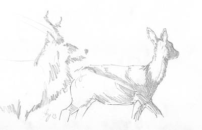 Drawing - Deer Drawing by Mike Jory