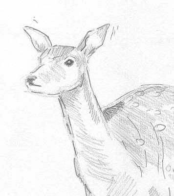 Deer Drawing - Deer Head by Mike Jory