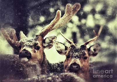 Art Print featuring the photograph Deer In The Snow by Nick  Biemans