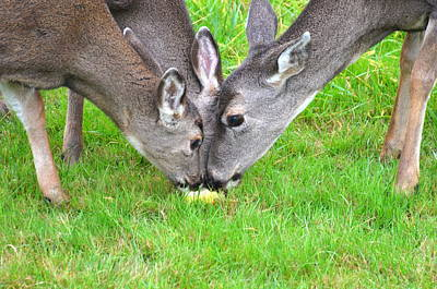 Music Figurative Potraits - Deer Triplets by Jeri lyn Chevalier