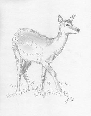 Drawing - Deer by Mike Jory