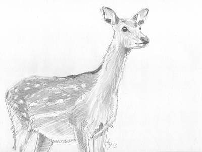 Drawing - Deer Sketch by Mike Jory