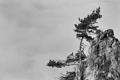 Grey Clouds Photograph - Defiant by Davorin Mance