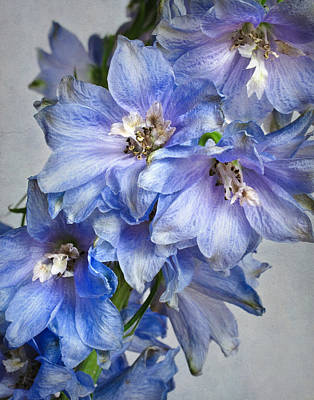 Delphinium Photograph - Delphinium Viii by David and Carol Kelly