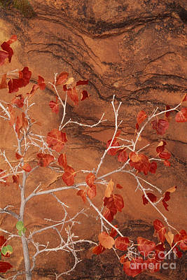 Photograph - Desert Plant Against Slickrock Wall Southern Utah by Dave Welling