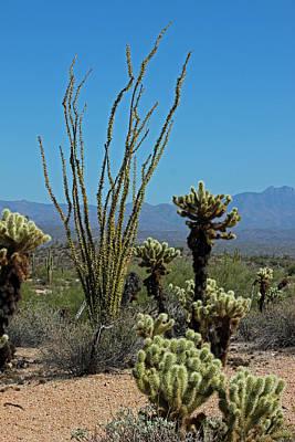 Desert Scenic II Art Print by Suzanne Gaff