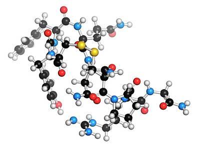 Molecule Photograph - Desmopressin Peptide Molecule by Molekuul