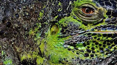 Details Iguana Art Print