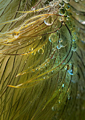 Dew Drops Art Print