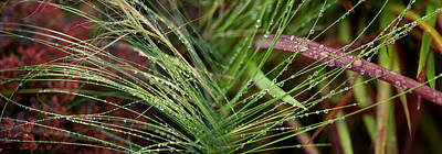 Dew Drops On Grass Art Print by Panoramic Images