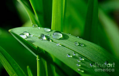 Photograph - Dew Drops by Terry Elniski