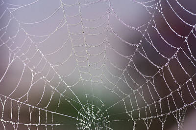 Photograph - Dew Web by WB Johnston