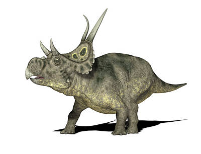 Paleozoology Photograph - Diabloceratops Dinosaur by Friedrich Saurer