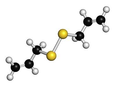 Diallyl Disulfide Garlic Molecule Art Print by Molekuul
