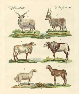 Different Kinds Of Sheep Art Print by Splendid Art Prints