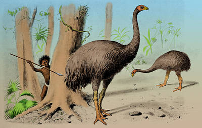 Dinornis Photograph - Dinornis, Giant Moa, Cenozoic Bird by Science Source