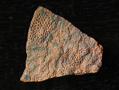Photograph - Dinosaur Skin Fossil by Millard H. Sharp