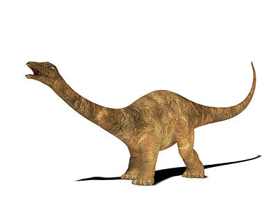 Diplodocus Dinosaur Art Print