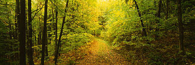Dirt Roads Photograph - Dirt Road Passing Through A Forest by Panoramic Images