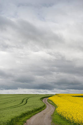 Dirt Roads Photograph - Dirt Road Passing Through Grain by Panoramic Images