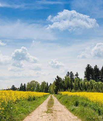 Dirt Roads Photograph - Dirt Road Passing Through Rapeseed by Panoramic Images