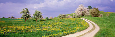 Zug Photograph - Dirt Road Through Meadow Of Dandelions by Panoramic Images