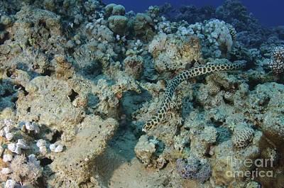 Aqaba Photograph - Diving At Aquaba - Red Sea by Photostock-israel