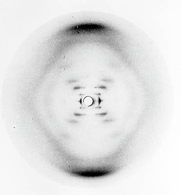 Molecule Photograph - Dna Discovery by King's College London Archives