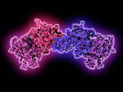 Oxidation Photograph - Dna Methyltransferase Molecule by Laguna Design