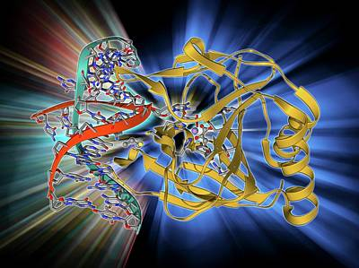 Molecular Structure Photograph - Dna Repair Enzyme by Laguna Design