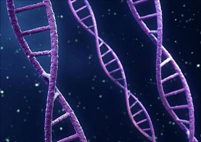 Dna Strands Art Print by Maurizio De Angelis/science Photo Library