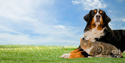 Background Photograph - Dog And Cat Together by Michal Bednarek