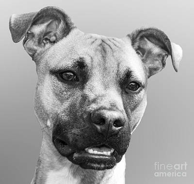 Photograph - Dog Portrait by Jeannette Hunt