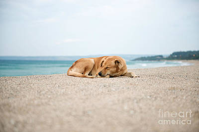 Photograph - Dog Sleeping On Beach by Yew Kwang