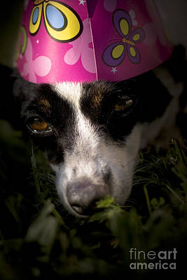 Dog Tired Party Animal Art Print by Jorgo Photography - Wall Art Gallery