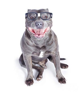Dog Wearing Nerd Glasses Print by Jorgo Photography - Wall Art Gallery