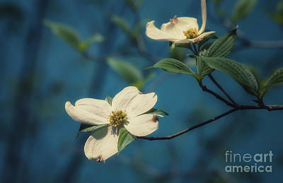 Photograph - Dogwood Bloom Over Blue Spring by Julie Clements