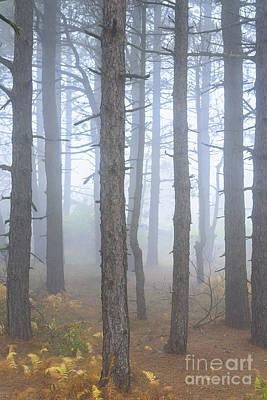 New Years - Dolly Sods Wilderness Autumn Fog by Thomas R Fletcher