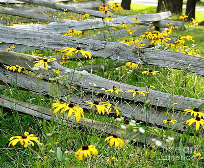 Split Rail Fence Photograph - Don't Fence Me In by Robin Erisman