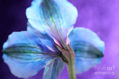 Blue Flowers Photograph - Don't Look Back by Krissy Katsimbras